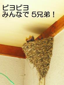 P1030774+-+繧ウ繝斐・+(2)_convert_20130601140224