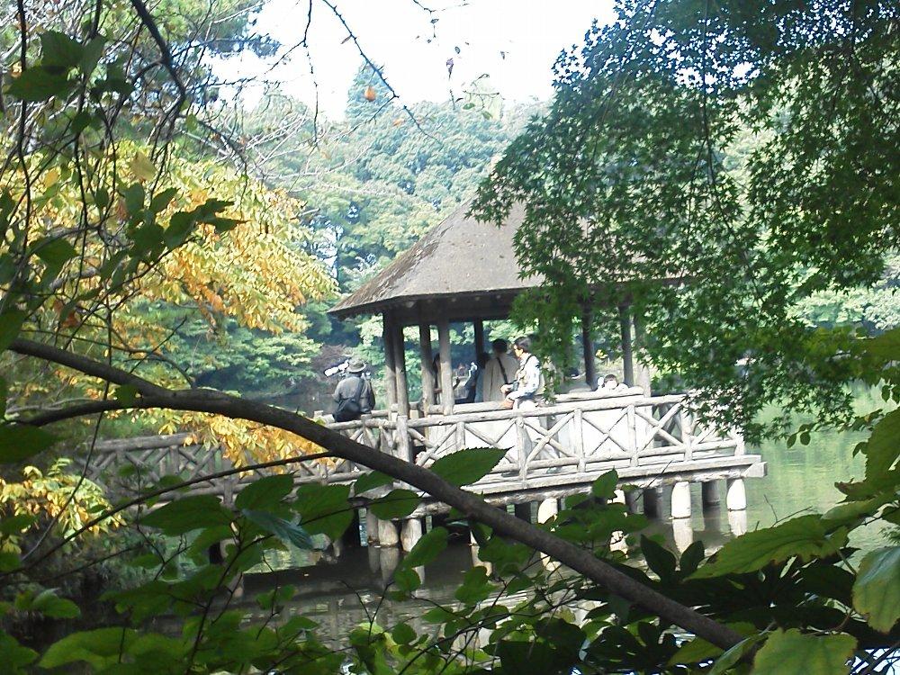 F1000390石神井公園