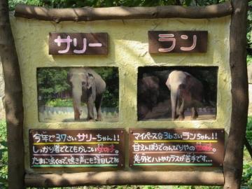 ゾウ二頭のこと