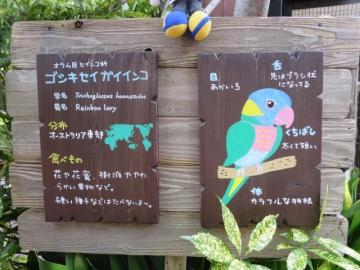 ゴシキの説明 (2)