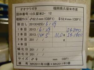 13久留米2-12 カード