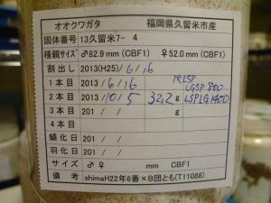 13久留米7-4 カード