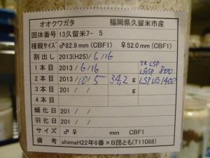 13久留米7-5 カード