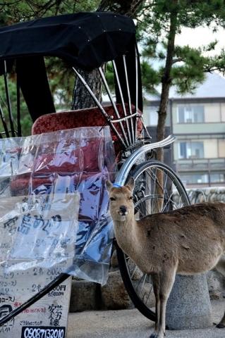 welcome to miyajima