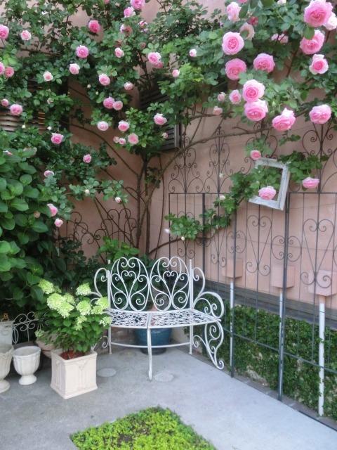20130519SHOP Rose (6)