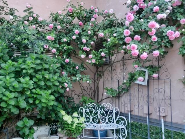 20130519SHOP Rose (5)