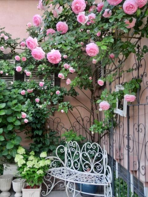 20130519SHOP Rose (4)