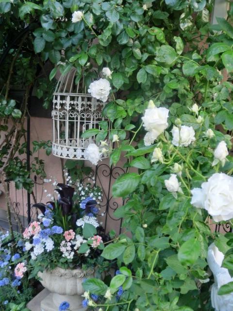 20130519SHOP Rose (3)