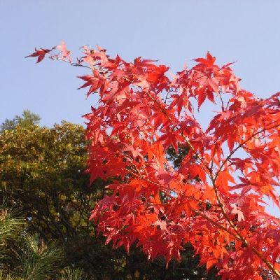 京都清涼寺