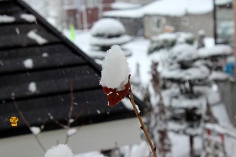 雪の朝。みなのか
