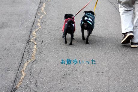 父とお散歩