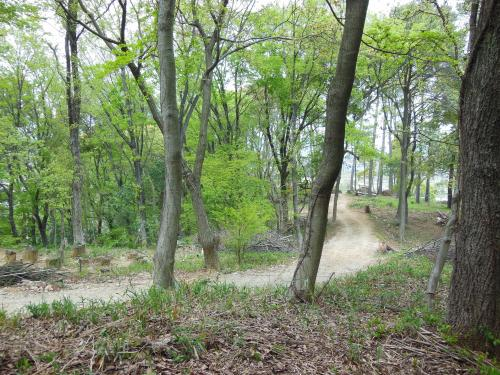 陽楽の森(春)