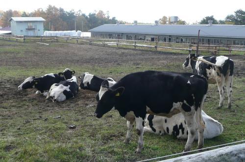 八ヶ岳中央農業実践大学の牛