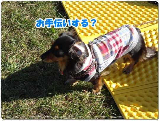 DSC00613_20141117143637d63.jpg