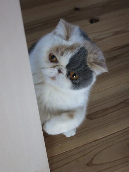 ドア越しにあずちゃんと