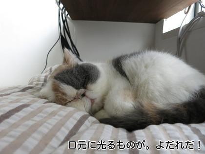 よだれつけながら寝る