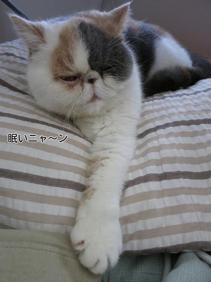 眠いニャ~ン