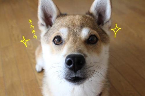 IMG_5992+AZUKI.jpg