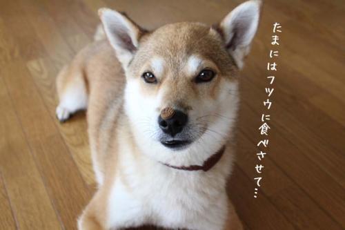 IMG_5998+AZUKI.jpg