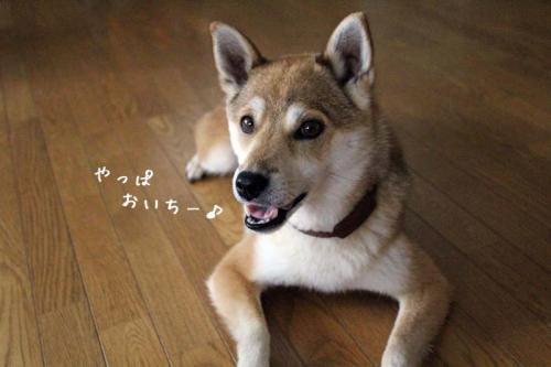 IMG_6015+AZUKI.jpg