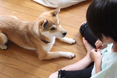 IMG_6269+AZUKI.jpg