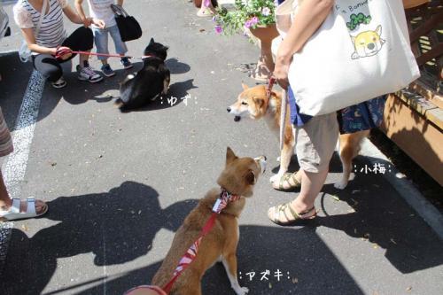 IMG_6795+AZUKI.jpg