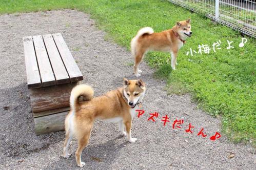 IMG_6940+AZUKI.jpg