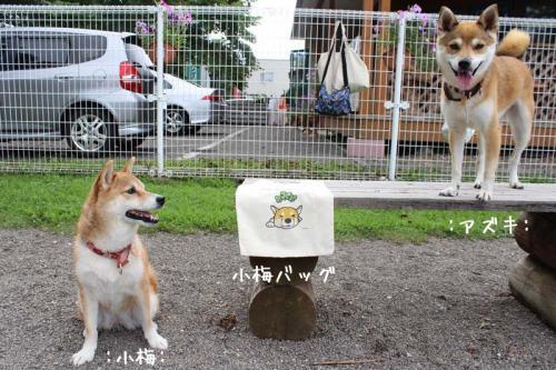 IMG_6969+AZUKI.jpg