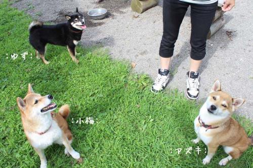 IMG_6996+AZUKI.jpg