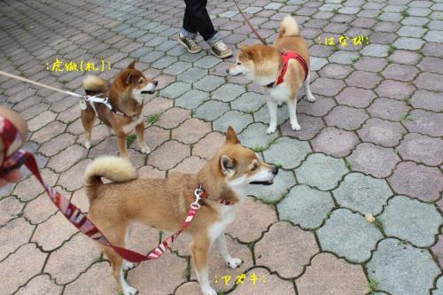 IMG_7206+AZUKI.jpg