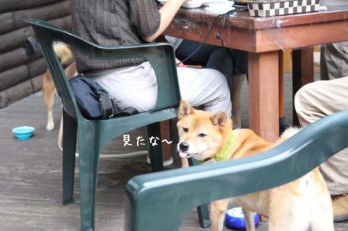 IMG_7276+AZUKI.jpg