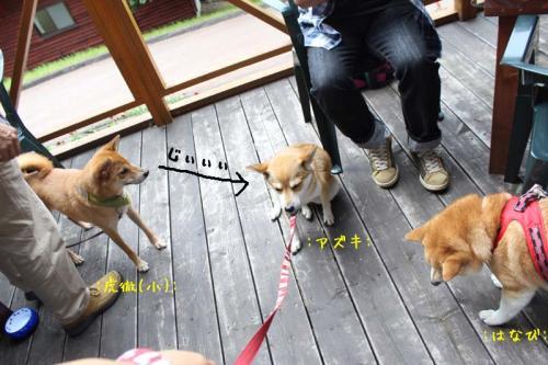 IMG_7310+AZUKI.jpg