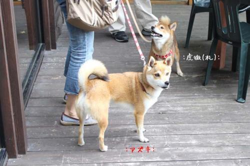 IMG_7312+AZUKI.jpg