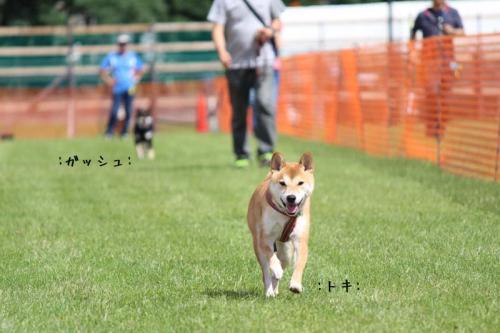 IMG_7782+AZUKI.jpg