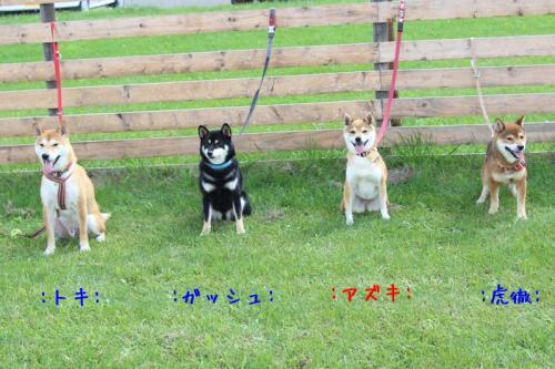 IMG_7823+AZUKI.jpg