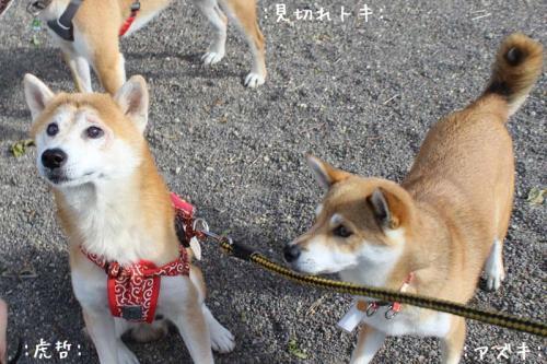 IMG_8258+AZUKI.jpg