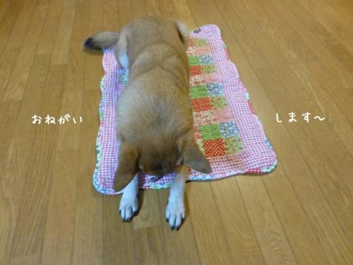 P1100978+AZUKII.jpg