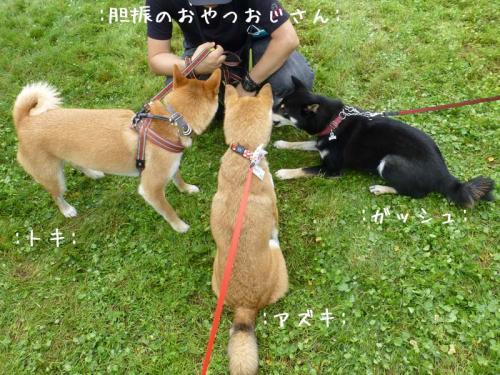 P1140485+AZUKI.jpg