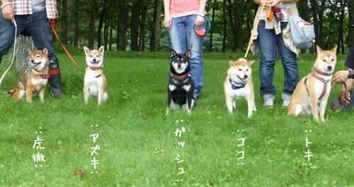 P1140532+AZUKI.jpg