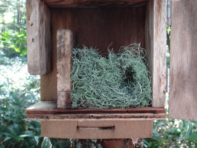 巣材サルオガセ150kb