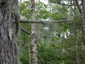 サルオガセ樹上 40kb