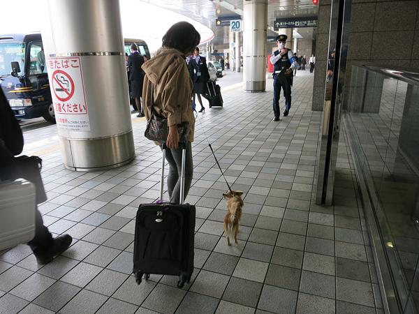 福岡空港 黄砂 マスク