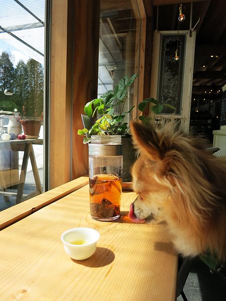 meon農苑 ロングパリッシュ 金絲紅 茶太郎