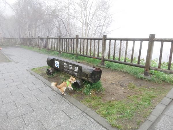 霧の支笏湖 展望台