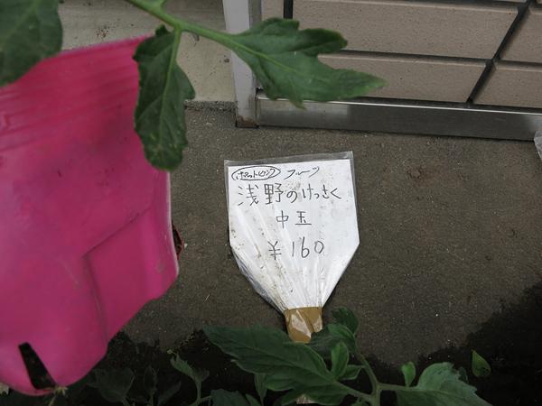 2013 家庭菜園 浅野の傑作
