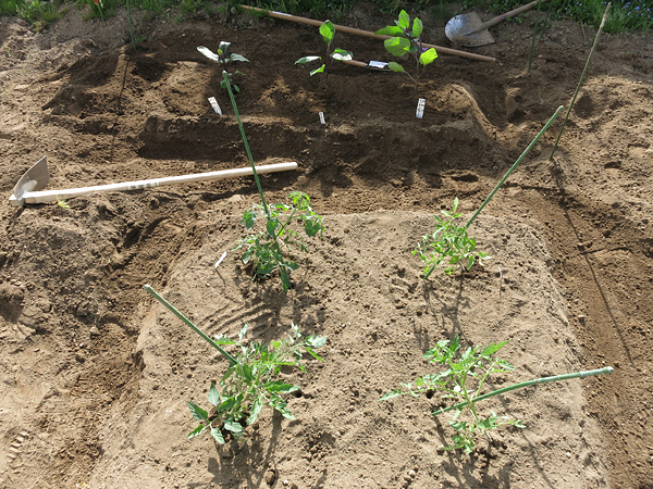 2013 家庭菜園 トマトとナス