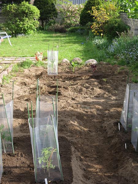 2013 家庭菜園 畑と茶太郎