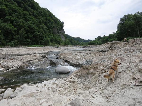 藻南公園 豊平川