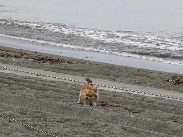 茶太郎 砂浜