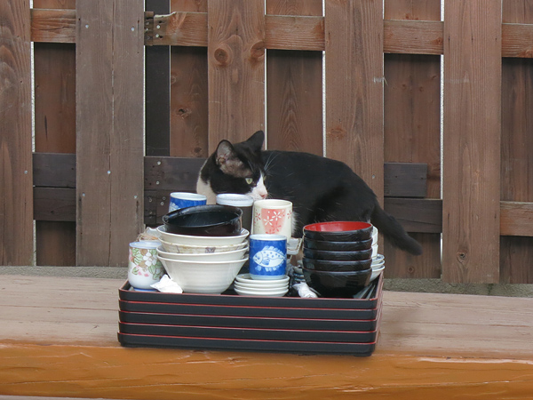北緯43度のお食事処 野良ネコ
